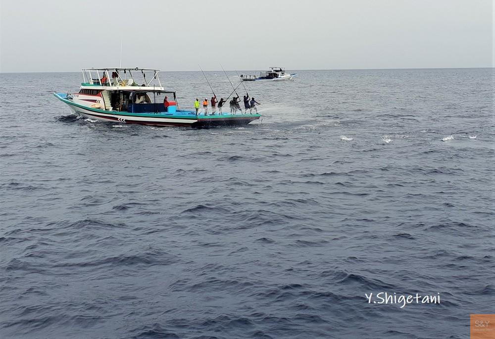 モルディブ カツオ漁